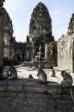 Monkey in Lopburi Stock Image