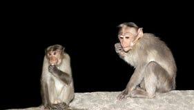 Monkey (macaque) Stock Photography