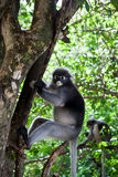 Monkey. Macaque was climbing trees in the forest Stock Photo