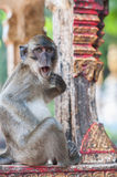 Monkey making a expression of surprise Stock Photography