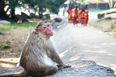 Monkey in Mamallapuram Royalty Free Stock Photos