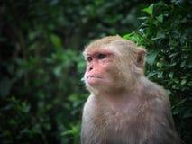 Monkey man Stock Photos