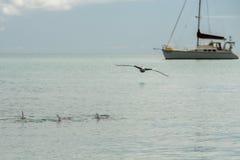 Monkey mia dolphins near the shore Royalty Free Stock Photos