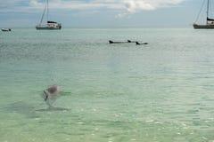 Monkey mia dolphins near the shore. Wild dolphins near the shore in Australia Monkey Mia beach stock photo