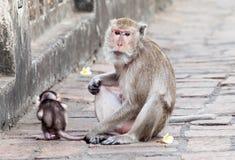 Monkey mit einem Baby an Phra Nakhon Khiri historischem Park, Phetcha Lizenzfreies Stockfoto