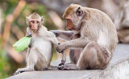 Monkey mit einem Baby an Phra Nakhon Khiri historischem Park, Phetcha Lizenzfreie Stockbilder
