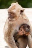 Monkey mit Schätzchen Stockbilder