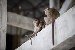 Monkey mom Royalty Free Stock Image