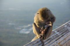 Monkey mom Royalty Free Stock Photography