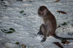 Monkey at the Monkey beach in Koh phi phi island,Thailand Stock Photo