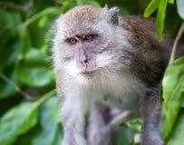Monkey on Monkey Beach Phi Phi, Thailand Stock Photos