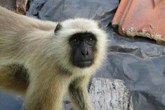Big Smile Sock Monkey Emoji Wall Sticker | Zazzle.com |Monkey Big Smile