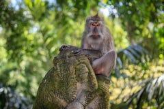 Monkey on a monkey Royalty Free Stock Photo