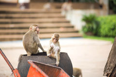 Monkey. S for food in the park Royalty Free Stock Image