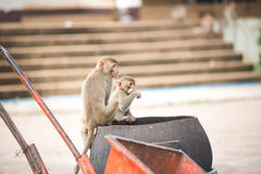 Monkey. S for food in the park Stock Images