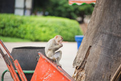Monkey. S for food in the park Royalty Free Stock Photo