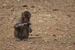Monkey. S in Thailand Royalty Free Stock Photos