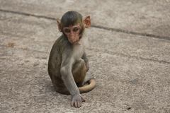 Monkey. S in Thailand Royalty Free Stock Image