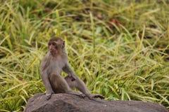 Monkey. S in Thailand Royalty Free Stock Photo