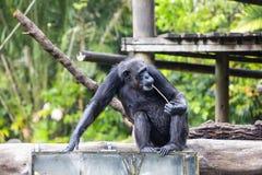 Monkey Stock Photography