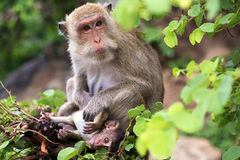 Monkey, mother with baby Stock Photography
