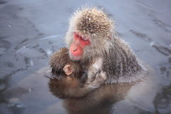 Monkey mother and baby Royalty Free Stock Images