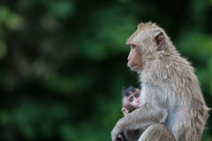 Monkey Mother With Baby Relax On The Floor. Royalty Free Stock Photos