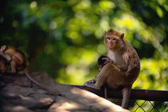 Baby monkey and monkey mother stock images