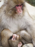Monkey Mother and Child Royalty Free Stock Photography
