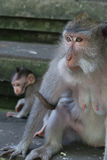 Monkey mother and child Royalty Free Stock Photos