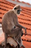 Monkey mother and child. Are sitting together Royalty Free Stock Photography