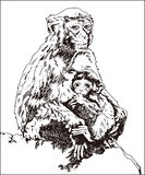 Monkey, mother and child. Vector graphics, hand drawn, monkey, mother and child, Animal Themes Royalty Free Stock Photography