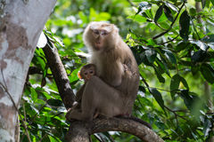Monkey mother and daugther Royalty Free Stock Photo