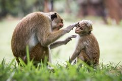 Monkey mother and her baby. A mother monkey and her baby in the jungle stock image