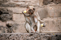 Monkey mother and her baby. Stock Photos