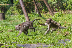 Monkey mother and its baby escaping Royalty Free Stock Image