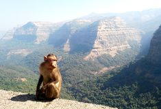 Monkey with mountain landscape background stock photos