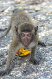 The monkey in mountains Stock Photo