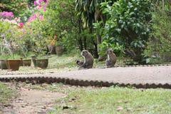 Monkey family royalty free stock photography