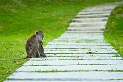 Monkey Mutter mit dem Schätzchen, das auf einem Gehweg stillsteht Lizenzfreie Stockfotografie