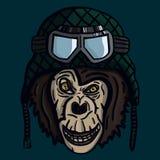 Monkey muzzle in helmet Stock Photos