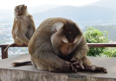 Monkey in national park, Thailand Stock Image