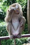 Monkey in national park in Thailand Royalty Free Stock Photography