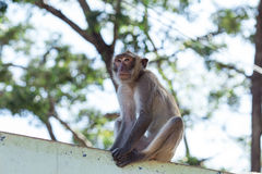 Monkey natural background Stock Photos