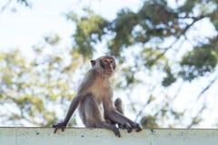 Monkey natural background Stock Image