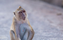 Monkey natural background Royalty Free Stock Photography