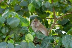 Monkey in natural habitat. Monkey on the Trees, monkey in natural habitat, rain forest and jungle stock photography
