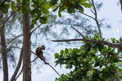 Monkey in natural habitat. Monkey on the Trees, monkey in natural habitat, rain forest and jungle stock image