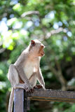 Monkey in nature Stock Photos