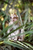 Monkey in nature Stock Images